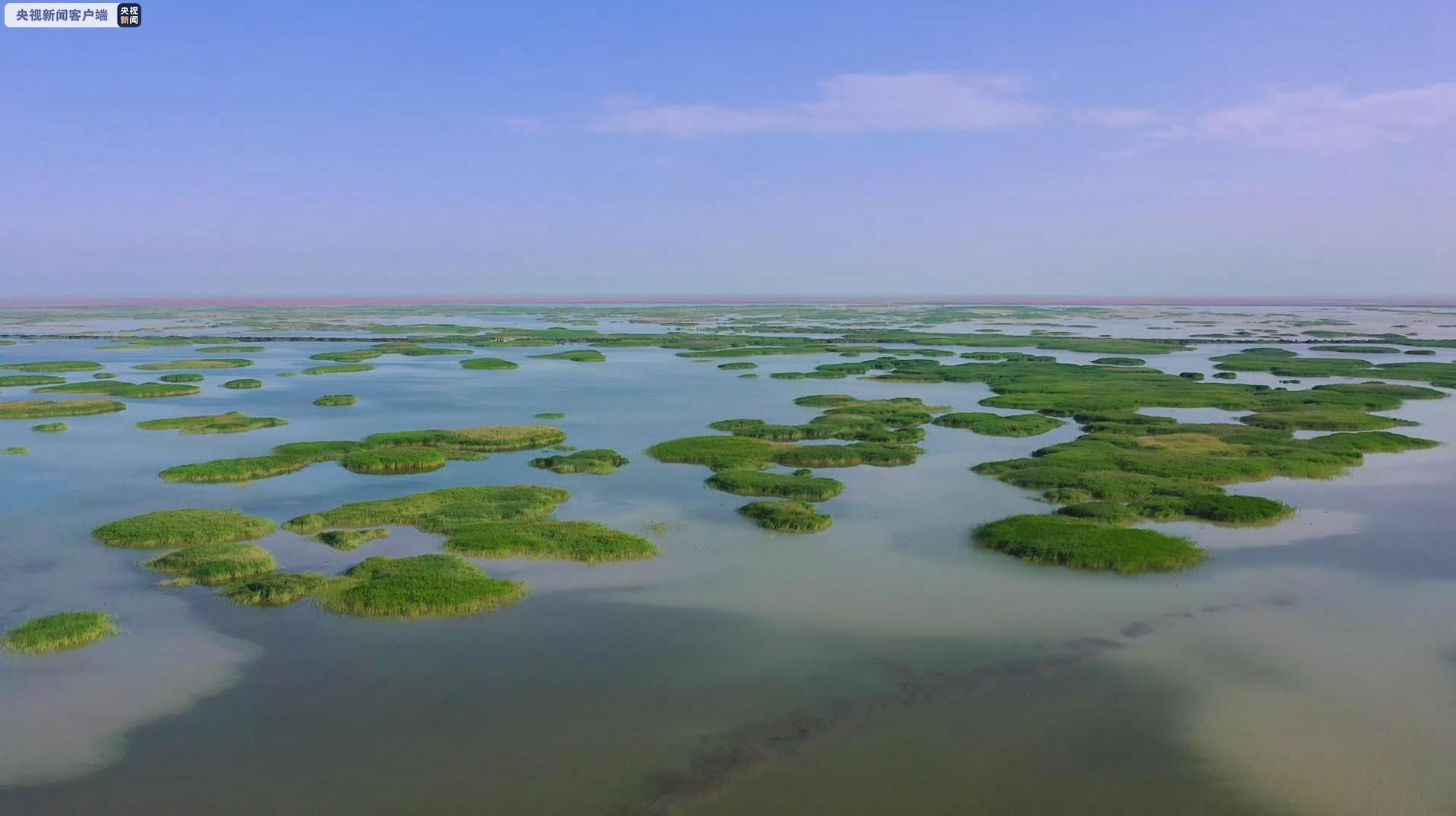 7月1日黄河下游进入主汛期黄河三角洲湿地生态补水将达5000万立方米