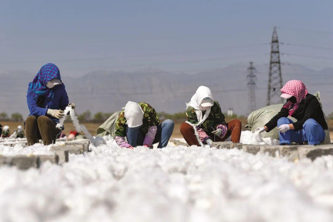 工人在宁夏石嘴山市星海湖湿地绑制用于改善水质的生物飘带。图/ 新华