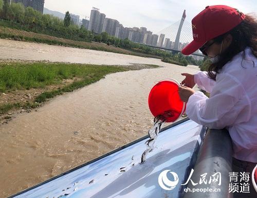 15万尾花斑裸鲤增添黄河(湟水河)生机