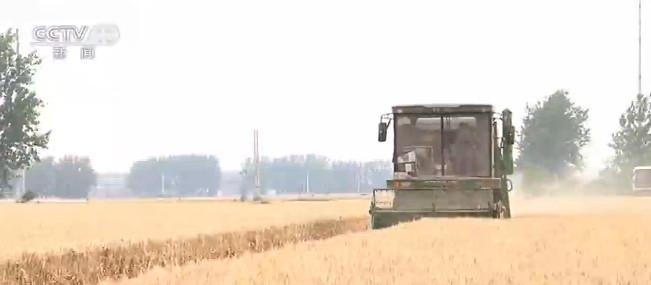 麦收一线观察 麦收进度近六成 优质专用小麦面积扩大图片