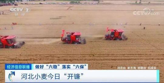 """河北:小麦""""开镰"""" 当地相关部门统一调度助力夏收图片"""