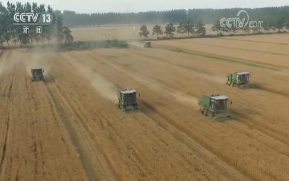 全国小麦机收过六成 品质提升保粮食安全图片