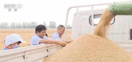 麦收一线观察:麦收进度近六成 优质专用小麦面积扩大图片
