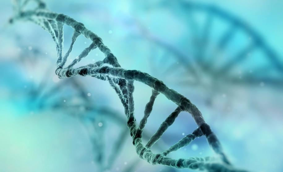Oxitec公司修改了蚊子的DNA(Getty)