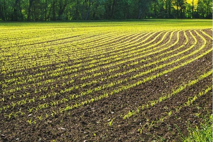 研究发现将石粉撒在农田上可吸收数十亿吨二氧化碳