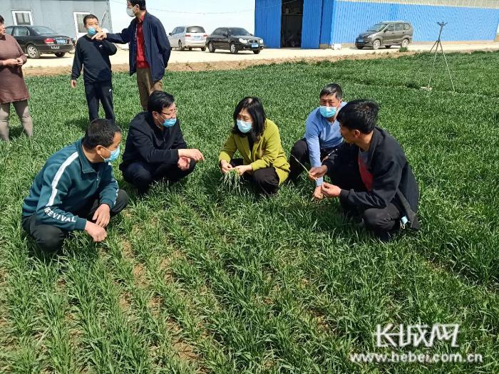 河北发布2020年农业主导品种、主推技术和绿色技术模式