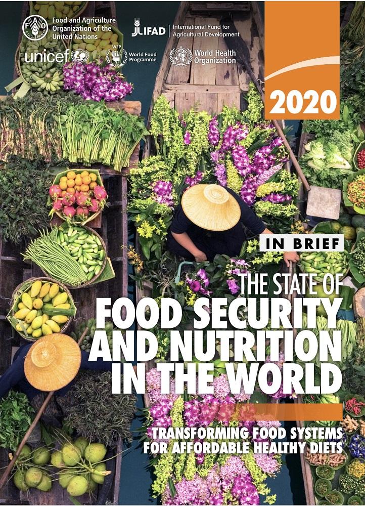 联合国粮农组织:实现2030年零饥饿目标仍然遥远