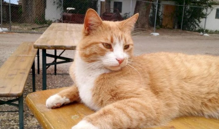 化石研究表明猫咪可能在1000多年前就被当作宠物饲养