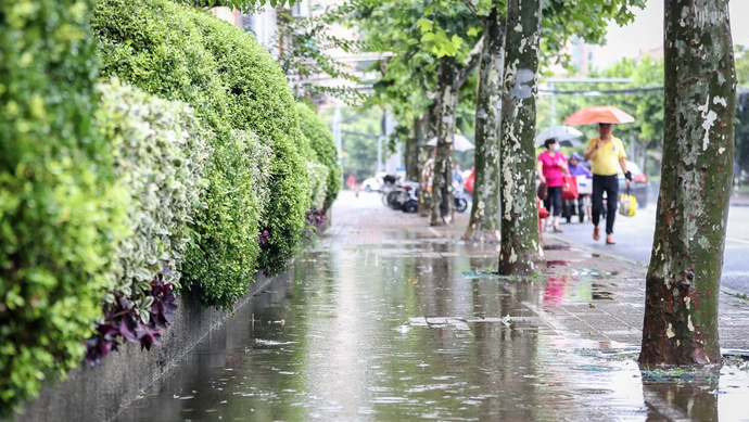 汛期以来上海已14天暴雨!雨量增近九成,路上为何没明显积水?图片
