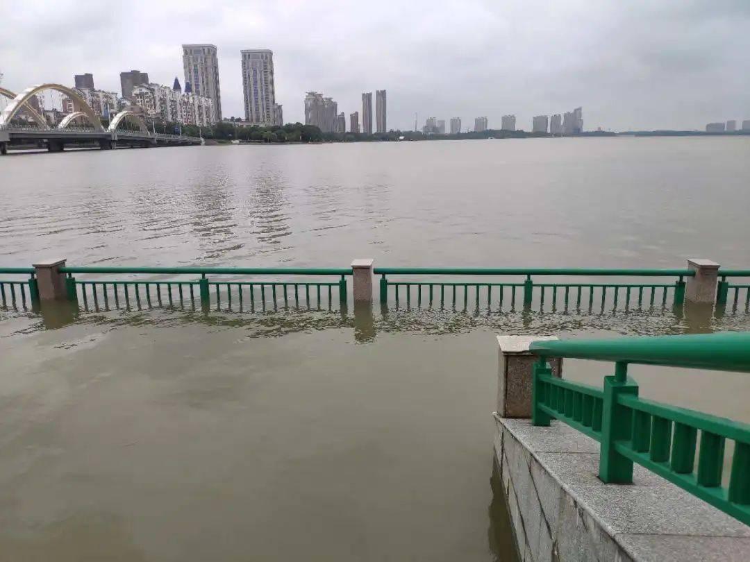 入汛以来,团氿河道水位上涨,水葫芦以及杂物被推到岸上,河畔的步道已被沉没。(戈畅 摄)