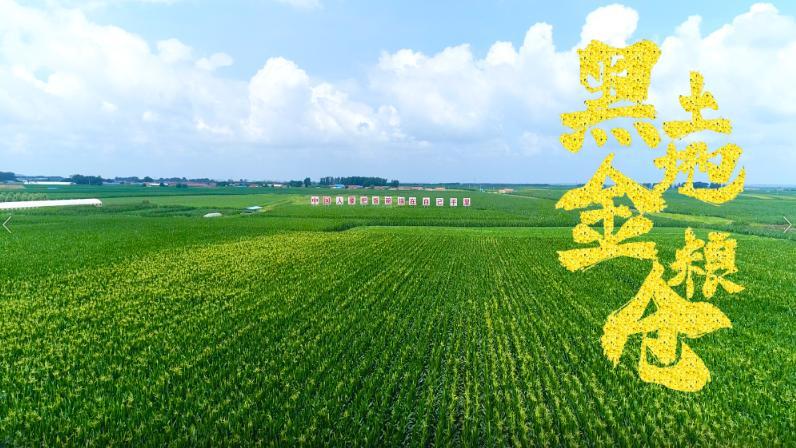 杏悦梨树县国杏悦家绿色玉米生产基地图片