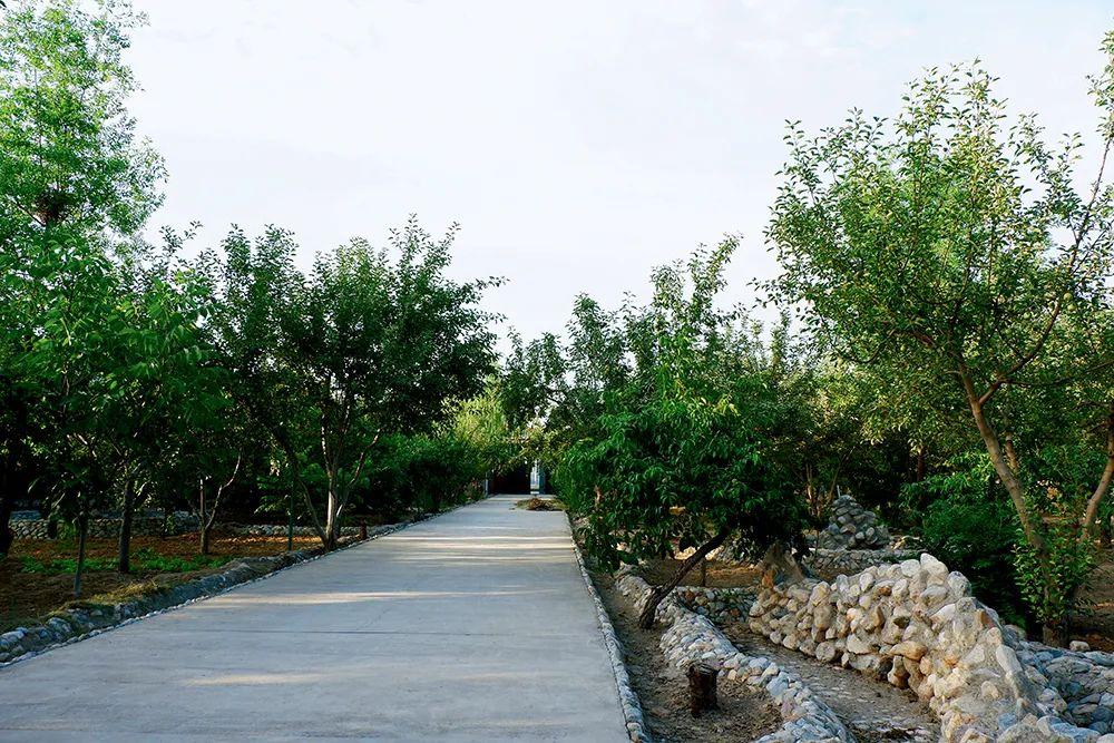 马兴国在西马银的住所由庄院、果园两部门组成,占地近4亩。本版拍照/本刊记者 黄孝光