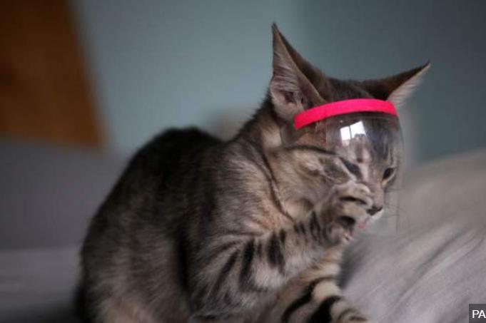 英国一宠物猫新冠病毒检测呈阳性
