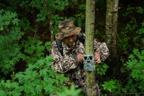 7月8日,野生东北虎保护者在完达山北麓查看架设在树上用于拍摄野生东北虎踪迹的远红外相机。(王松 摄)