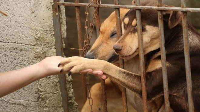 在巴西,大量宠物遭到遗弃(BBC)