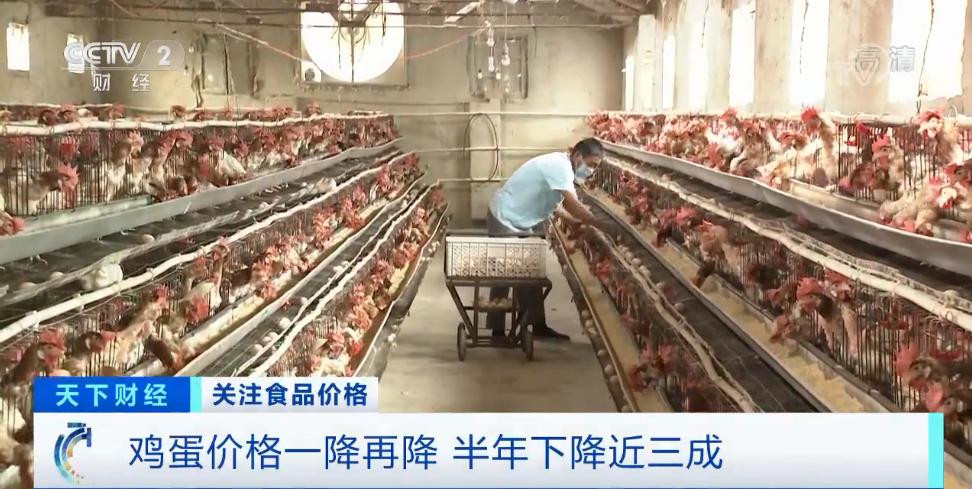 杏悦鸡蛋价格大跌近30%养殖户卖一斤杏悦亏0图片
