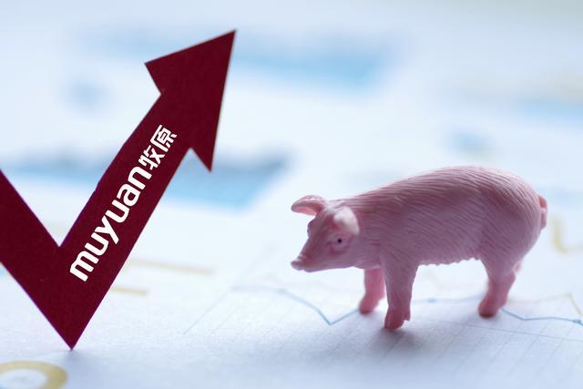 养猪到底多烧钱?100多亿利润不够用,牧原股份再借141亿