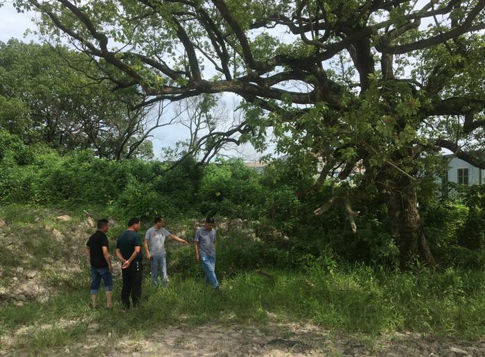 德清县生态林业综合服务中心走访勘察古树情况
