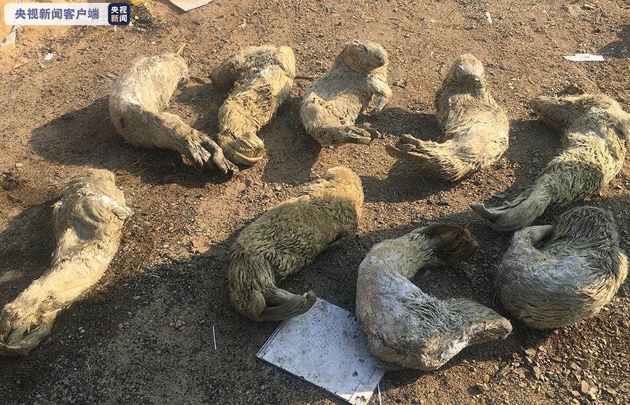 大连斑海豹盗猎案开庭 42名被告人将分三次审理