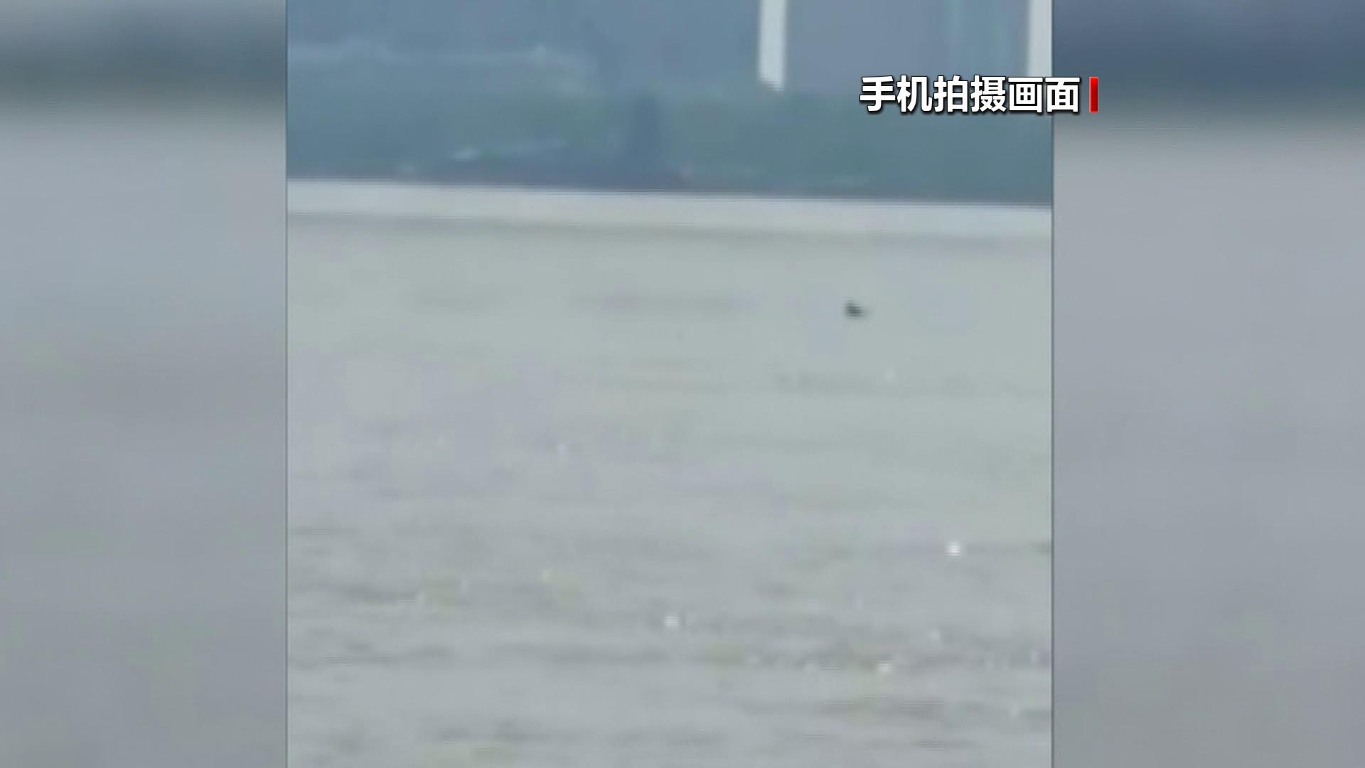 """罕见!仅剩一千多头的长江江豚在武汉成群""""露脸"""""""