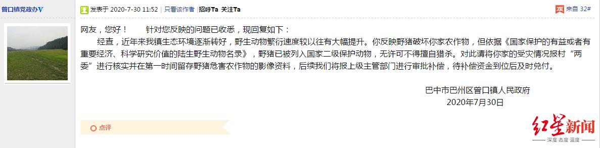 """四川山村""""野猪成灾"""" 村民庄稼受损申请补偿遇尴尬"""