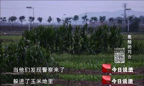 为躲警察藏在玉米地里,谁知飞来更大的横祸