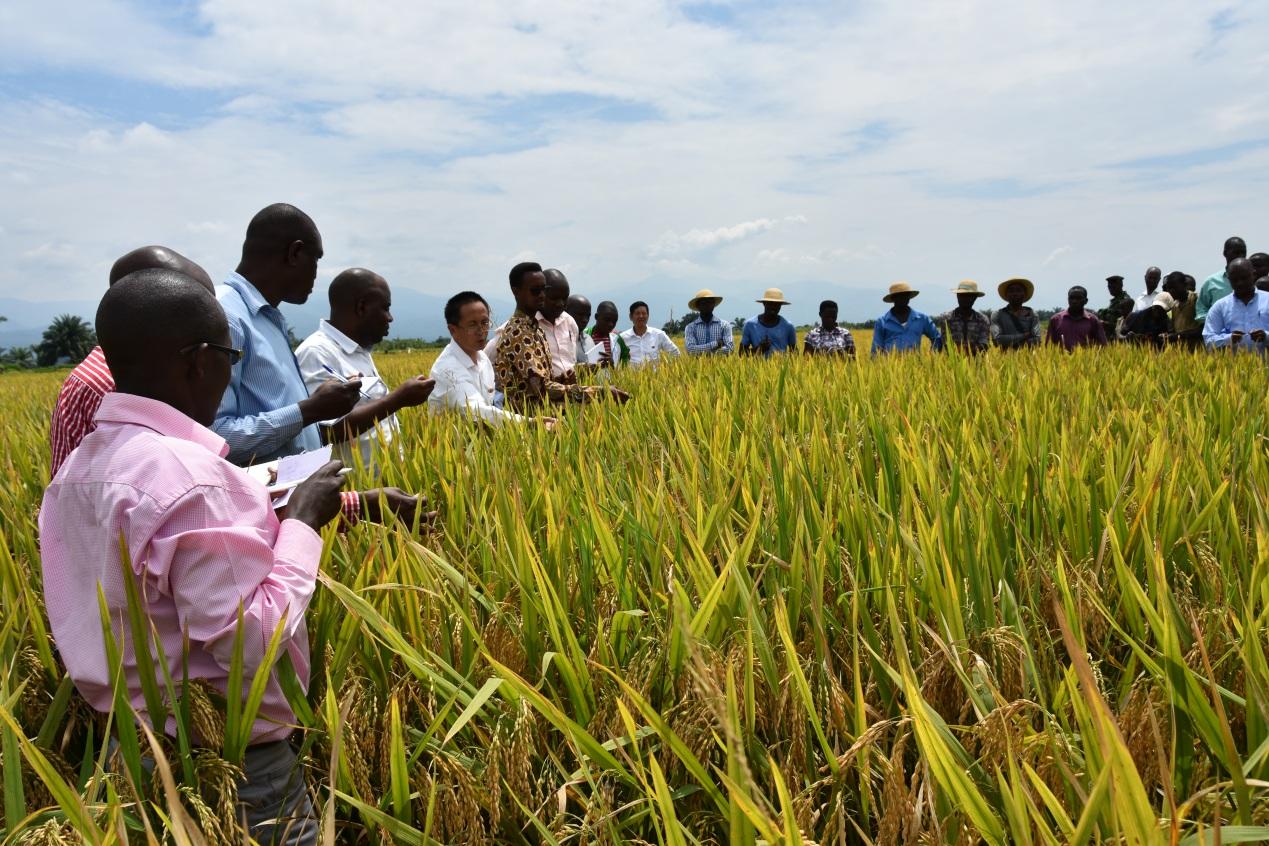 中国援布隆迪农业合作项目助力当地水稻发展
