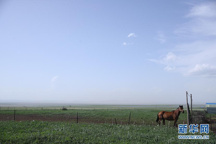 五畜兴旺的边疆生活