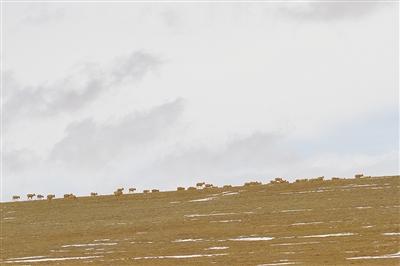 恒行官网登录,们的恒行官网登录国家公园卓乃湖畔图片