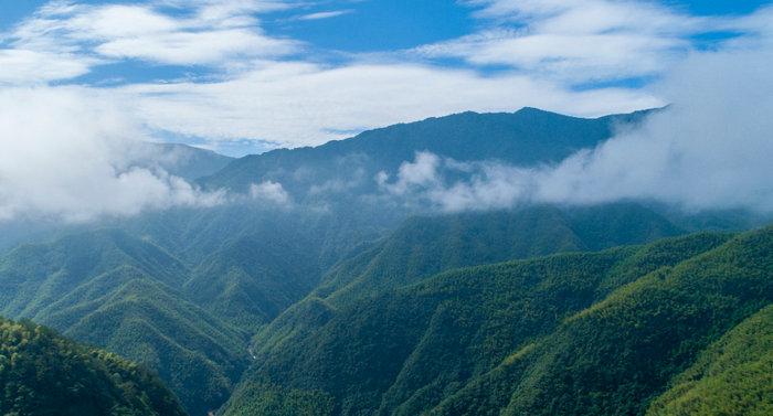 安吉县在全省林业产业发展大会上作典型发言