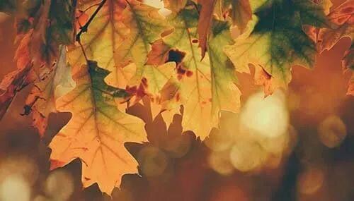 亿兴开户日立秋|您的假期余额亿兴开户已过半~~图片