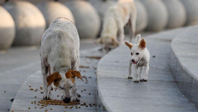 【摩登2app首页】人摩登2app首页遗弃犬只案图片