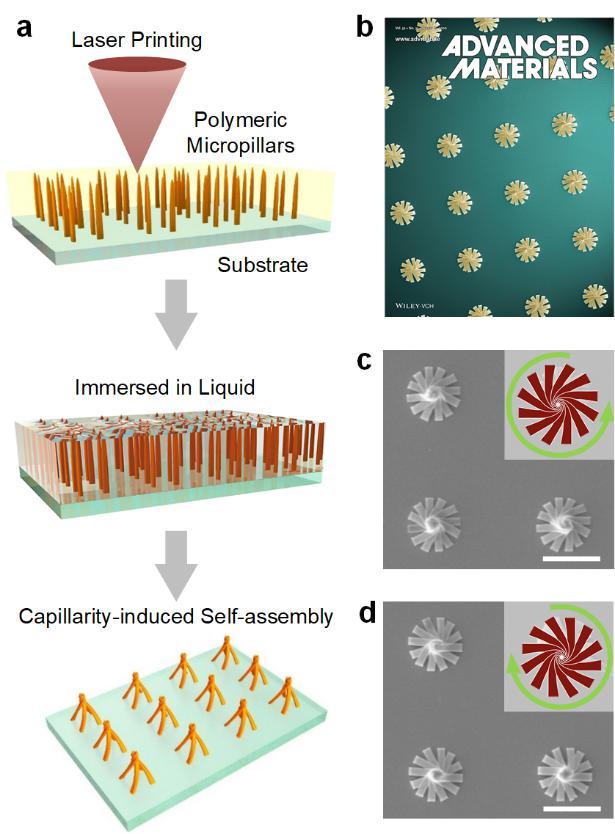 中国科大飞秒激光结合自组装复合加工技术研究取得新进展