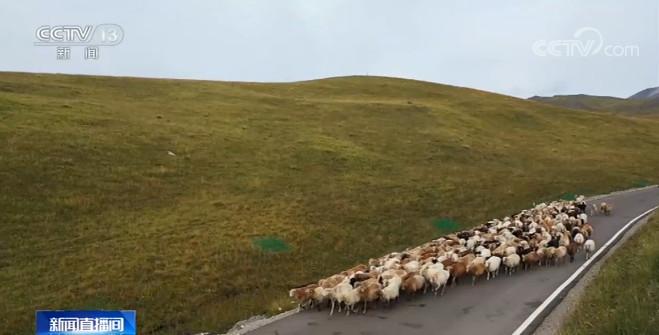 新疆伊犁河谷百万头只牲畜开启秋季转场图片