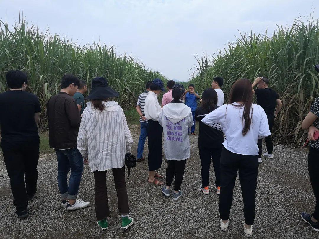 广西蔗区20/21榨季调研
