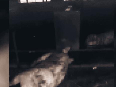 吉林一猪舍莫名起火,70多头猪全被烧死