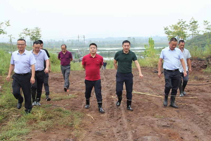 """总投资千万的""""阳新猪""""保种场项目开工"""