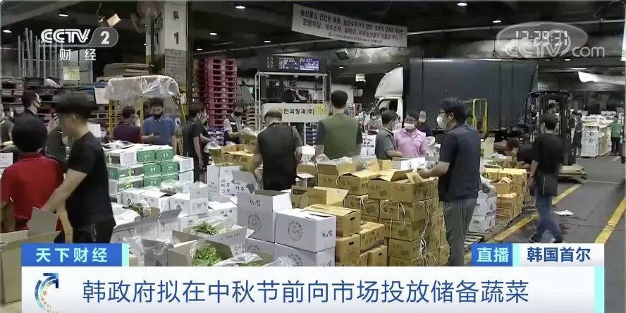 韩国白菜价格暴涨,58元一棵!泡菜都严重紧缺了
