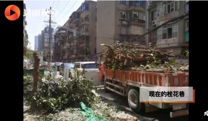 成都桂花树被砍处理结果公布:罚款超50万 多方被追责图片