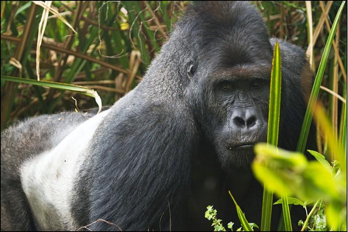 世界自然基金会报告详述自1970年以来野生动物数量减少68%的情况