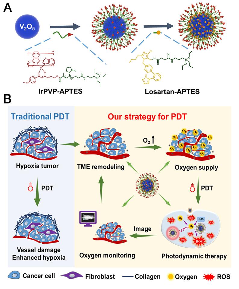 探索·收获!化学化工学院蒋锡群课题组提出克服肿瘤光动力治疗乏氧问题的新方法图片