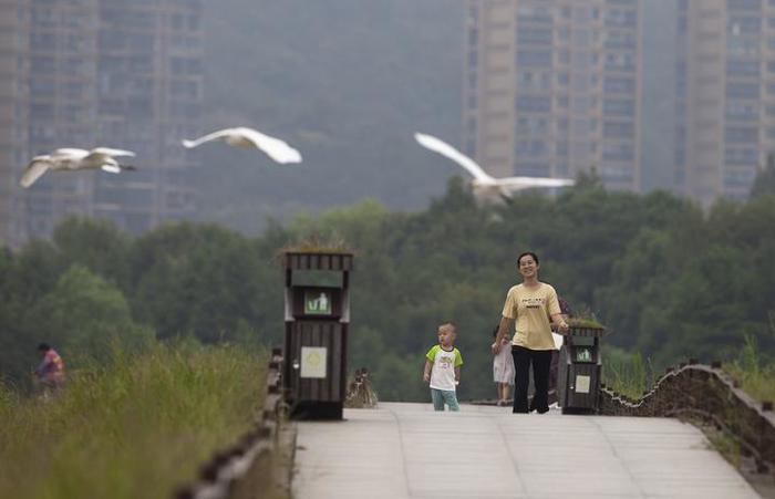 城南湿地美 白鹭舞翩翩图片