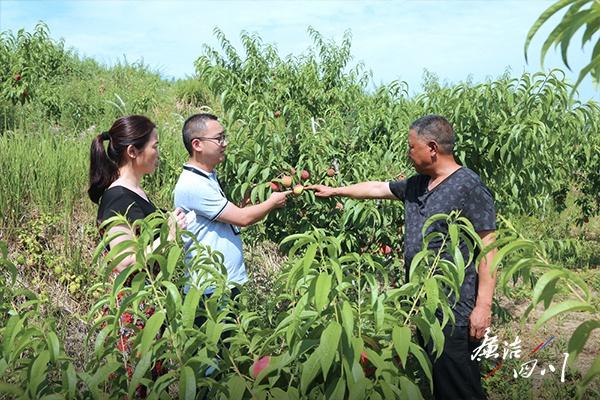 在战组督桃稻村小基采摘园产检察地(生长业)薇摄杨。