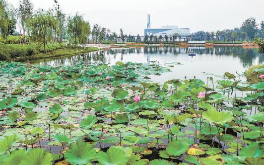 """瀛海工业大院变身湿地公园 四年 不一样的""""蓝绿交织"""""""