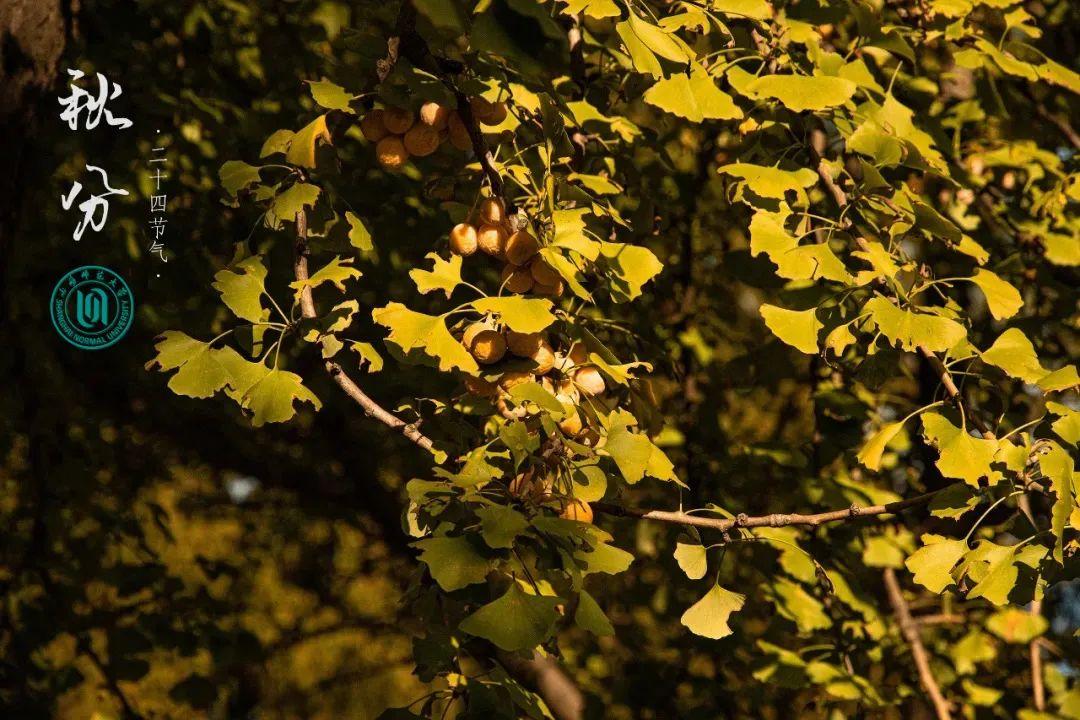 秋分|燕将明日去,秋从此时分图片