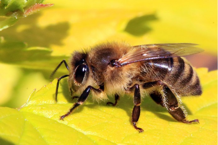 研究称智能手机和Wi-Fi辐射与昆虫数量下降之间存在联系