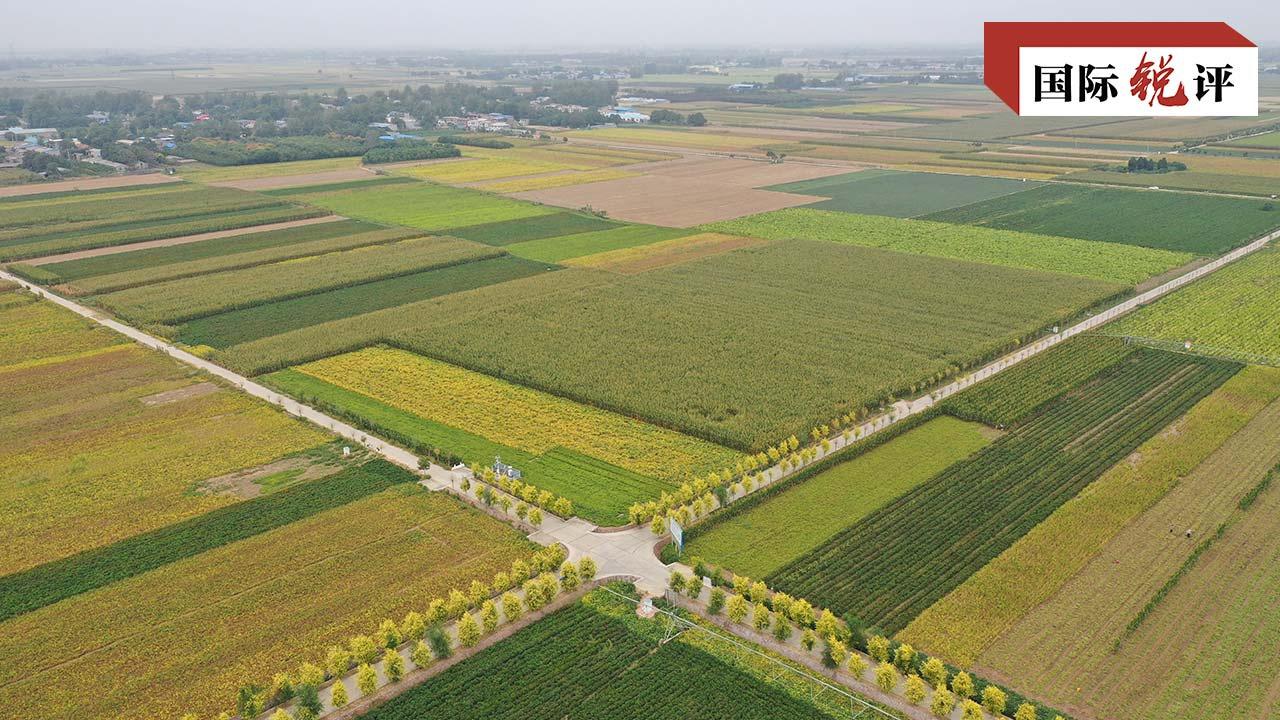 国际锐评:来之不易的丰收表明中国粮食安全有充分保障图片