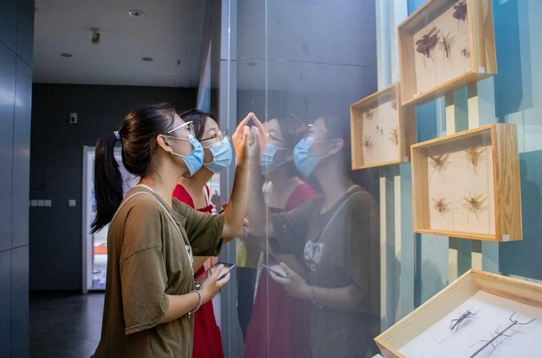 新生在博物馆旁观昆虫标本( 黄荣菁 摄)