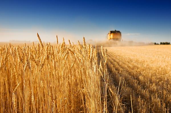 8月份农业农村经济运行稳定向好图片