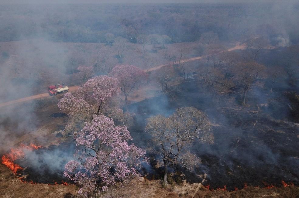 巴西世界最大湿地火灾加剧 9月着火点数量破历史记录